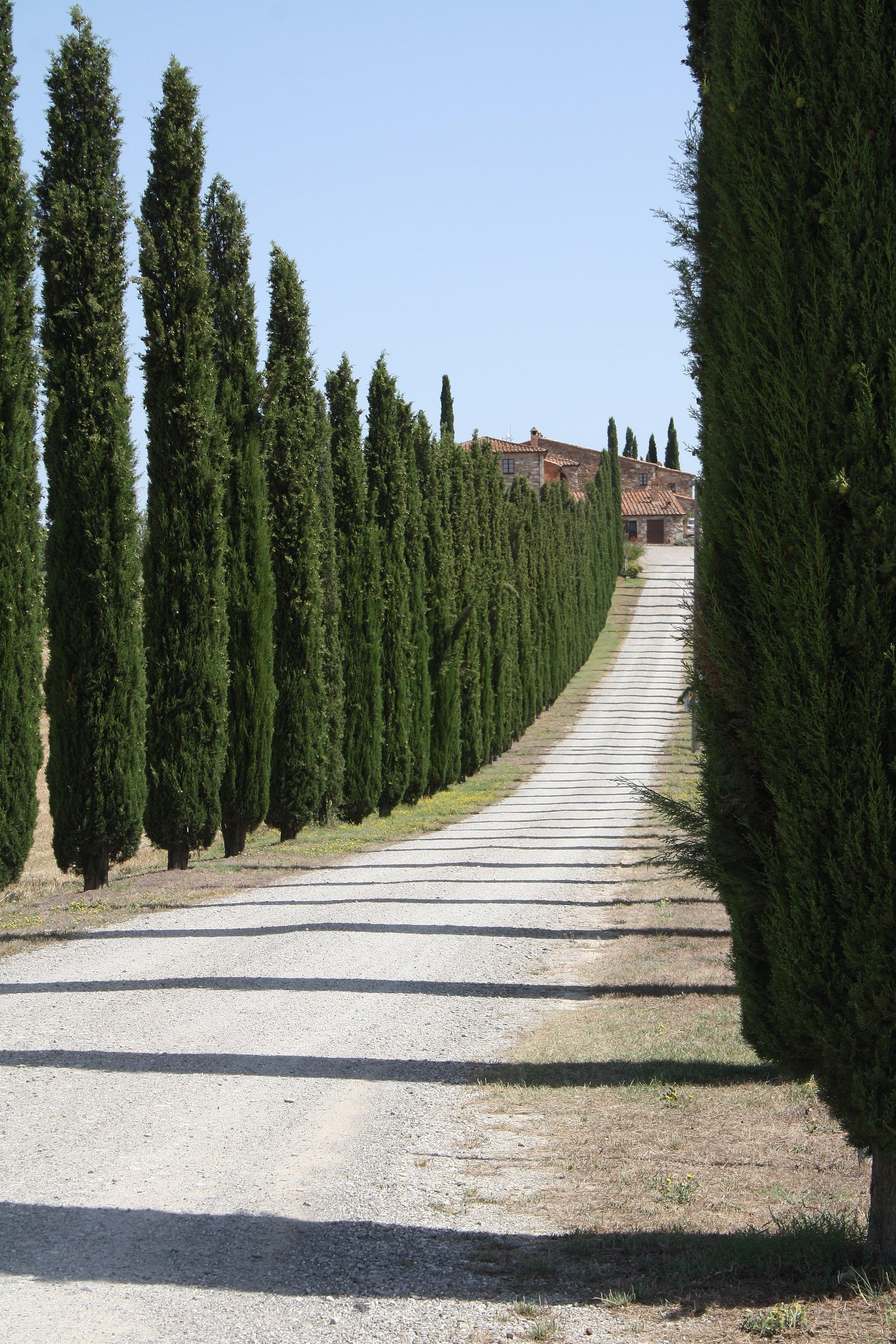 Via Cassia - Masseria e cipressi (2)