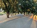 Viale Valadier - Rome (IT62) - 2021-08-30 - 1.jpg