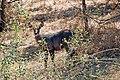 Victoria Falls 2012 05 24 1679 (7421907222).jpg