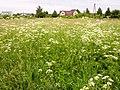 Views of Latvia IMG 20130610 135152 - Flickr - davispuh.jpg
