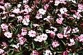 Villa Taranto - Blumenbeet 3.jpg