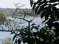 Vista da Represa - Parque Guarapiranga - Av. Guarapiranga 505 (4) - panoramio.jpg