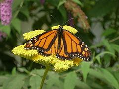 WPZ Butterflies & Blooms 07.jpg