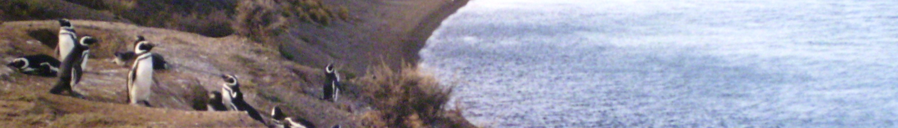 WV banner Chubut province Penguins on Valdes Peninsula.png