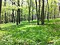 Wald am Hang.jpg