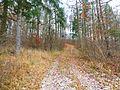 Waldweg zum Rohrberg.jpg