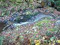 Wandern im November in Todtmoos - panoramio (21).jpg