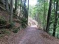 Wanderweg zur Wegelnburg 08.jpg