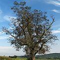 Warwick Township, PA, USA - panoramio (15).jpg
