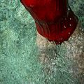 Waterlilies 01, 2006.jpg