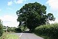 West Hatch, road junction with oak tree - geograph.org.uk - 1422501.jpg