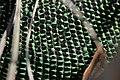 Western Green Lizard - Lacerta bilineata (17010139032).jpg