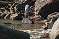 Western Serengeti 2012 06 02 4091 (7557746538) (2).jpg