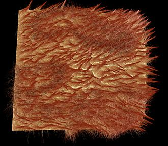 Fur - Computer generated image of wet fur