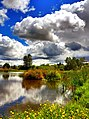 Wetlands in Salem by Ken Cannon (8272124471).jpg