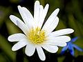 White Flower Closeup.jpg