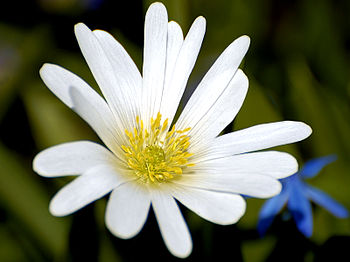 White Flower Closeup.jpg