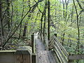 White Pines Forest State Park2.JPG