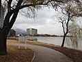 Willows in Yanagasaki Lakeside Park.JPG