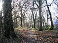 Woodland Track - Oakwood Boundary Road - geograph.org.uk - 1128619.jpg