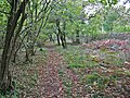 Woodland path in Hoe coppice, Sixpenny Handley - geograph.org.uk - 75833.jpg