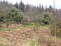 Woodpecker Trail near Rockcliffe - geograph.org.uk - 382752.jpg