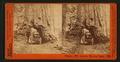 Wowona, 27ft, diameter, Mariposa Grove, by Watkins, Carleton E., 1829-1916.png