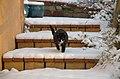 Wraxall 2009 MMB 09.jpg