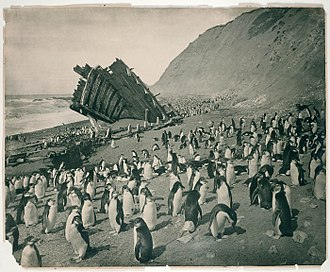Frank Hurley - Image: Wreck of the 'Gratitude', Macquarie Island, 1911