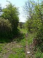 Wyndeats Lane, Stogursey - geograph.org.uk - 134296.jpg