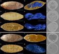 Xenomorphia resurrecta fossil tomography.png