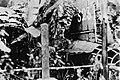 Yamamoto's airplane crash.jpg