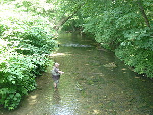 Yellow Breeches Creek - Fishing in the Boiling Springs Lake tributary to the Yellow Breeches Creek in Boiling Springs