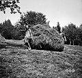 Z drogovjem nesejo kopice, Vino 1948.jpg