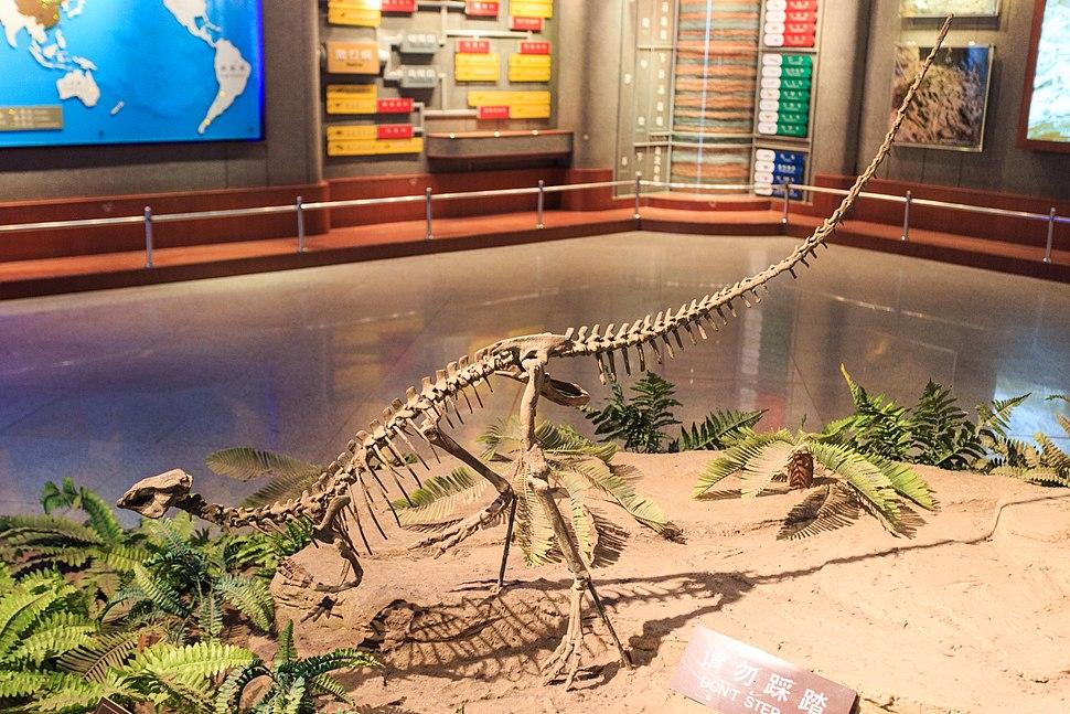 Zigong Dinosaur Museum Agilisaurus louderbacki