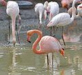 Zoo de Vincennes, Paris, France April 2014 (20).jpg