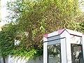 Zugewachsene Beschilderung neben Nordausgang, Bhf. Düren, 04.10.2014. - panoramio.jpg