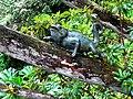 """""""Chameleon"""", Attadale Gardens - geograph.org.uk - 1479663.jpg"""