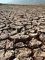 """Dry land."".JPG"