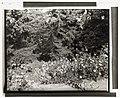 """Elk Rock,"" Peter Kerr house, 11800 SW Military Lane, Portland, Oregon. Ravine stairway LCCN2008677597.jpg"