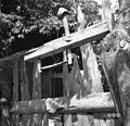"""Stau?nca"" (past) za kune lovit, Kal 1952.jpg"