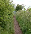 'Black Path' at New Bilton - geograph.org.uk - 1349227.jpg