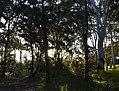 (1)Centennial Park afternoon-1.jpg