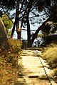 ® S.D. MADRID PARQUE DEL OESTE - PRADERA DESCENDENTE - panoramio.jpg