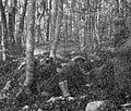 Štab XVIII. divizije med ofenzivo na Plešivici.jpg