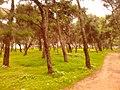 """Δασάκι στη στάση """"Πεύκων"""" - panoramio.jpg"""