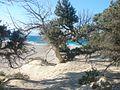 Νήσος Χρυσή (γαϊδουρονήσι) 4.jpg