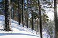 Барсова гора - panoramio (2).jpg