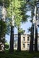 Група вікових дерев тополі білої 13.jpg