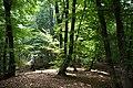 Демерджи, деревья на склонах, Крым.jpg